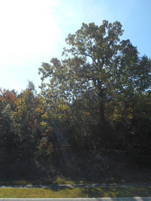 165 Forest Oak Dr., Hollister, MO 65672 (MLS #60090489) :: Sue Carter Real Estate Group