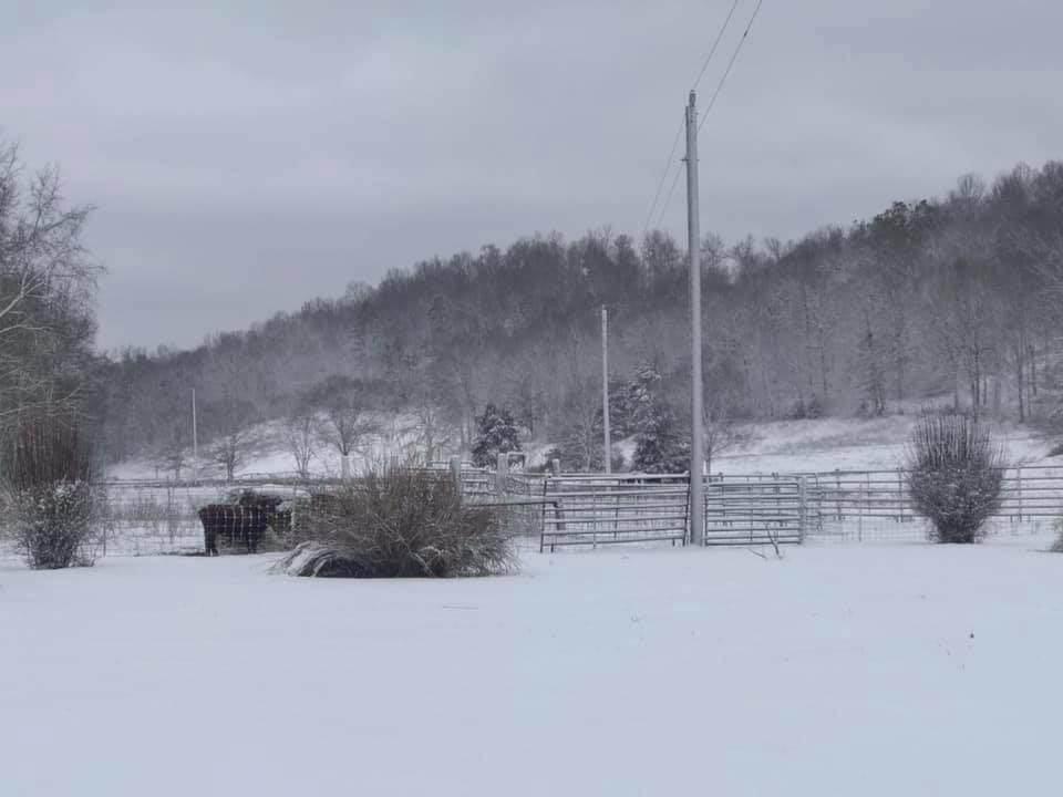 1704 County Road 612 - Photo 1