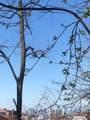 0 Edger Terrace - Photo 1