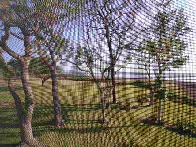 12 Cartagena Ct, St Augustine, FL 32086 (MLS #190935) :: Tyree Tobler | RE/MAX Leading Edge