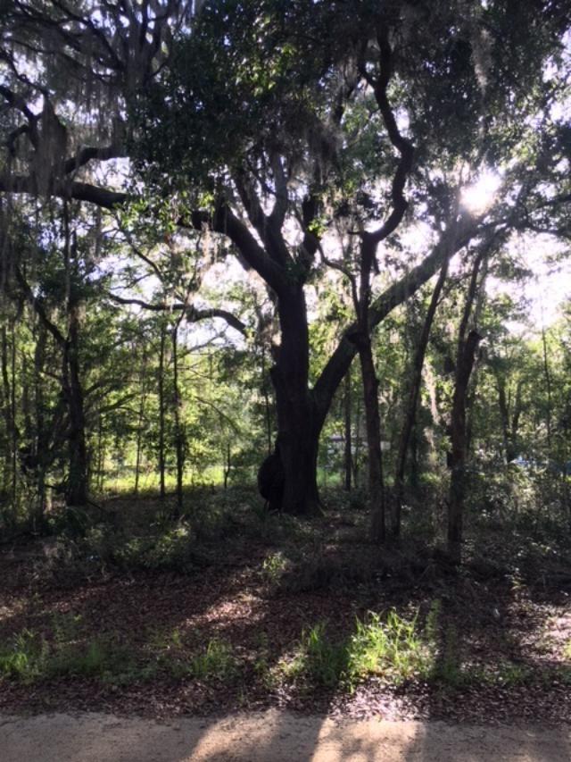 Carolyn Ave, Interlachen, FL 32148 (MLS #179312) :: Memory Hopkins Real Estate