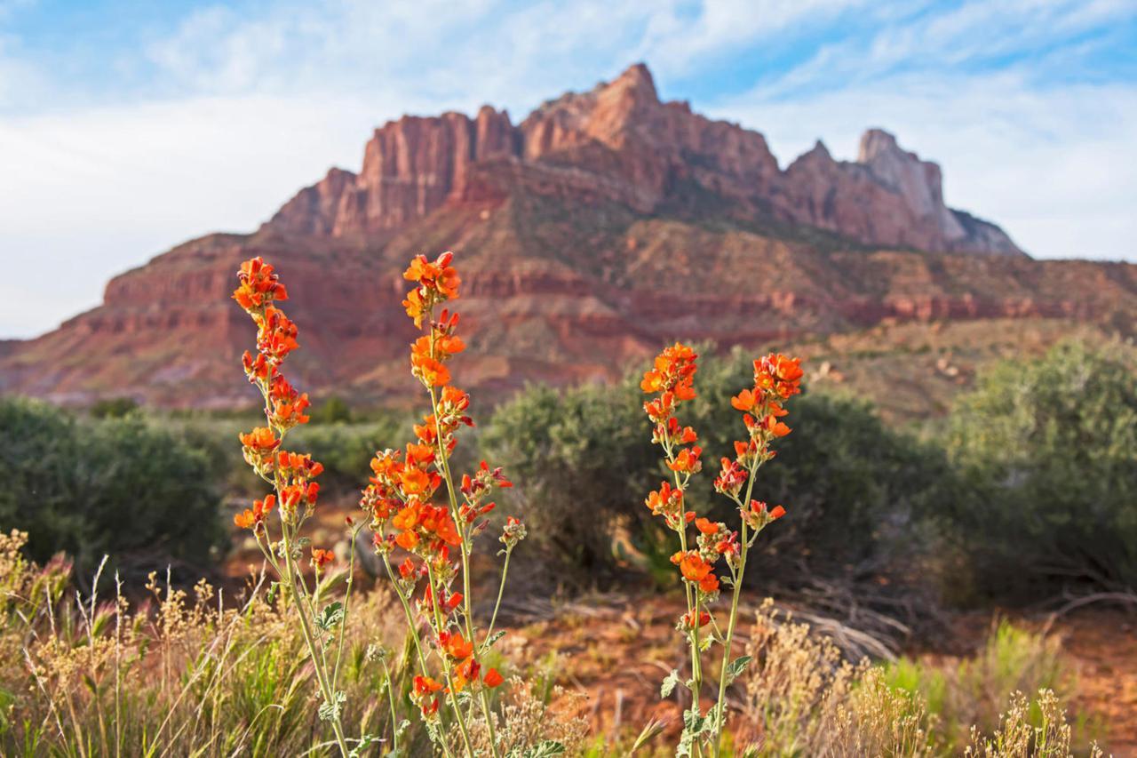 2538 Anasazi Way - Photo 1