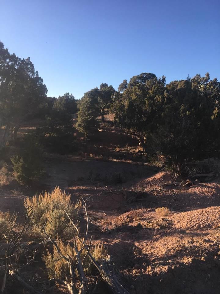 17486 Little Pinto Creek Rd - Photo 1