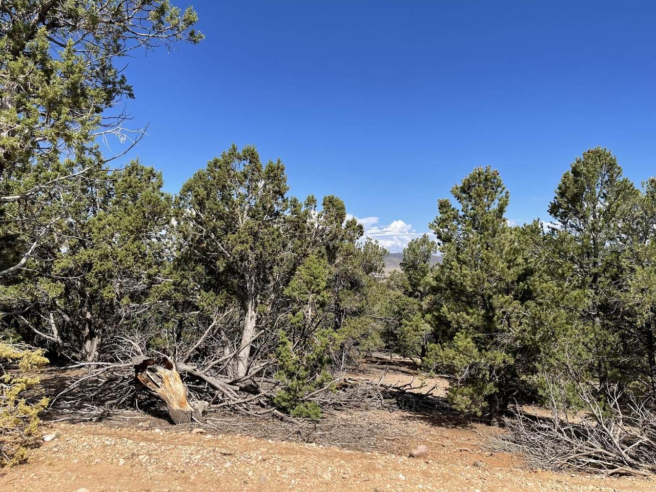 Spring Canyon Drive - Photo 1