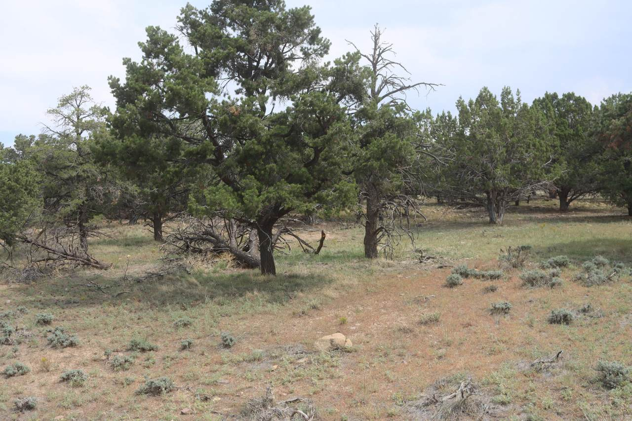 4 Acres South Of Summit - Photo 1