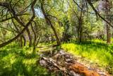 200 Canyon Road, Tax ID #7026 - Photo 31