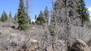 Lot #26 Deer Trail Ln, Virgin, UT 84779 (MLS #17-184328) :: Remax First Realty