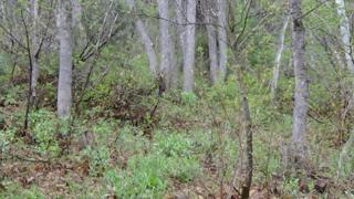 1 Acre Lot Spring Creek Dr, Virgin, UT 84779 (MLS #17-185189) :: Susan Hansen Realty Group