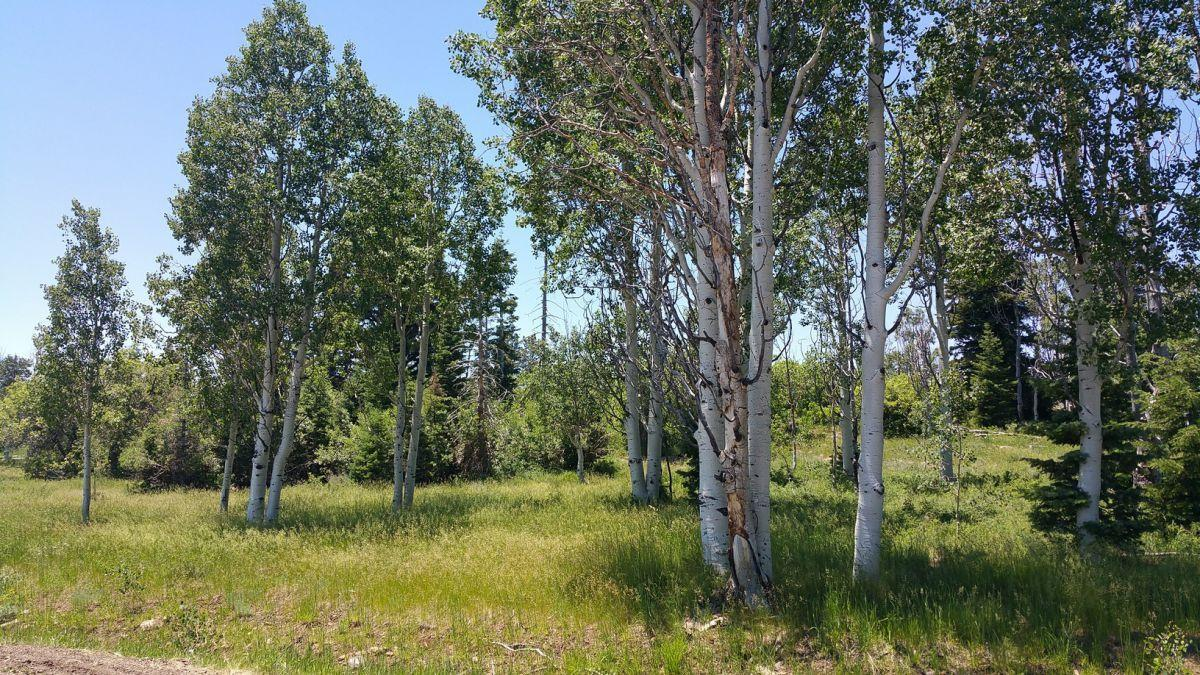 Whispering Pines Lot #21 - Photo 1