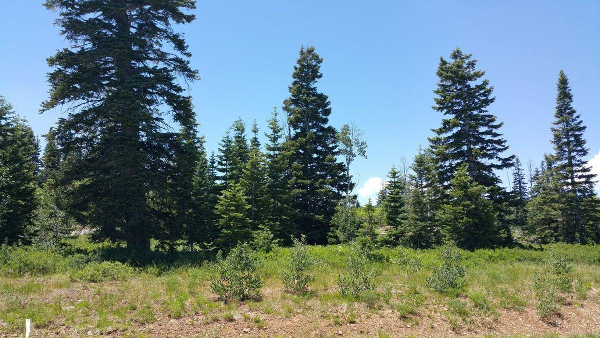 Whispering Pines Lot #53 - Photo 1