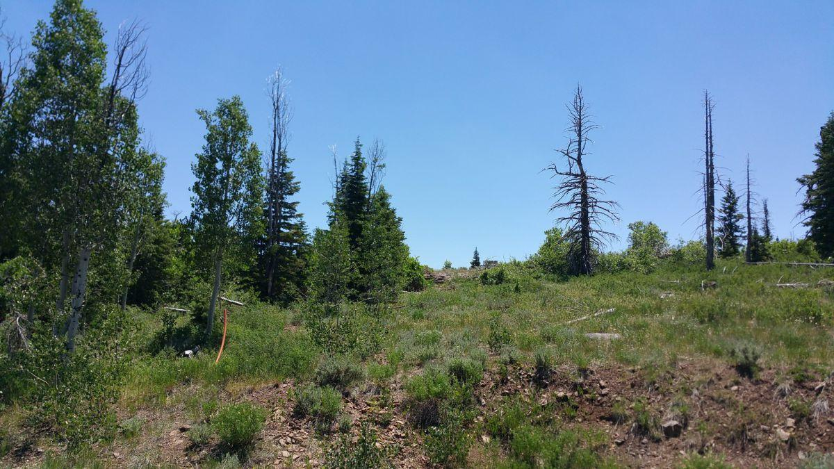 Whispering Pines Lot #57 - Photo 1