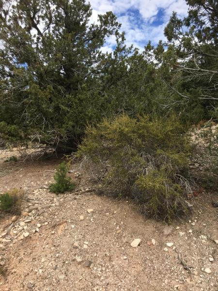 43 Sundance Kid Trail, Central, UT 84722 (MLS #18-191912) :: Saint George Houses