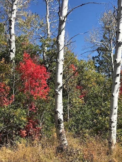 Whispering Pines Lot#81, Virgin, UT 84779 (MLS #20-213530) :: Remax First Realty