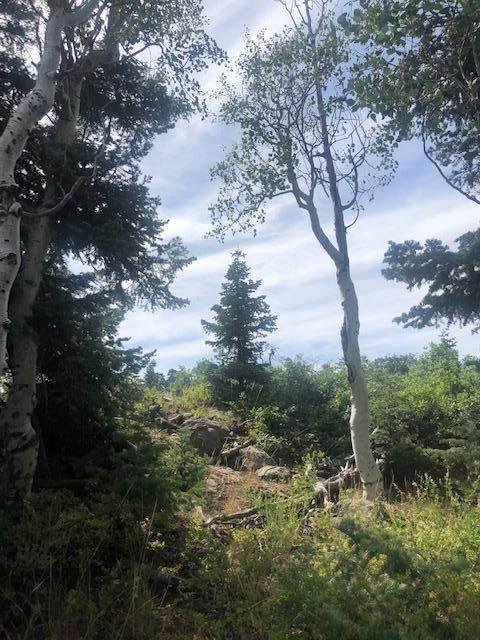 Whispering Pines Lot#86, Virgin, UT 84779 (MLS #20-213532) :: Remax First Realty