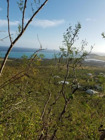 267 Union & Mt. Washington Ea, St. Croix, VI 00820 (MLS #19-1033) :: Hanley Team | Farchette & Hanley Real Estate