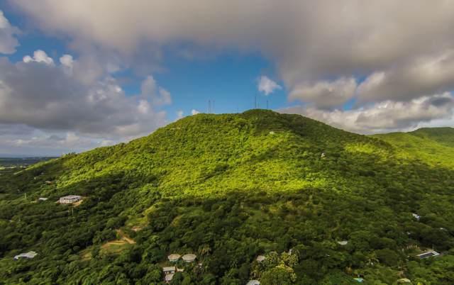 529 Mon Bijou Ki, St. Croix, VI 00000 (MLS #19-1449) :: Hanley Team | Farchette & Hanley Real Estate
