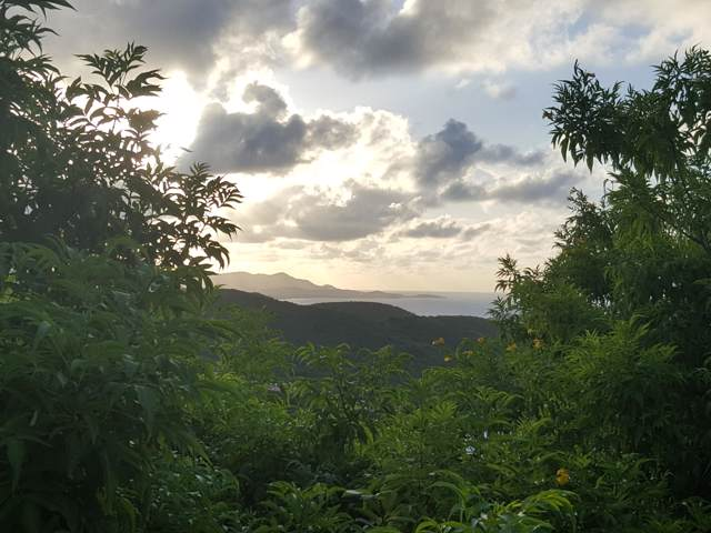 196 Union & Mt. Wash Ea, St. Croix, VI 00000 (MLS #19-1459) :: Hanley Team | Farchette & Hanley Real Estate