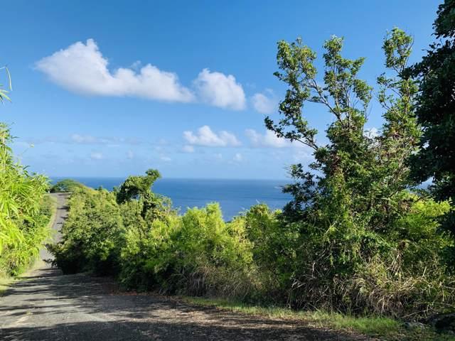 45 Prosperity Nb, St. Croix, VI 00840 (MLS #19-2020) :: Hanley Team | Farchette & Hanley Real Estate
