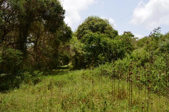 5 & 7 Mt. Victory Na, St. Croix, VI 00840 (MLS #19-419) :: Hanley Team | Farchette & Hanley Real Estate