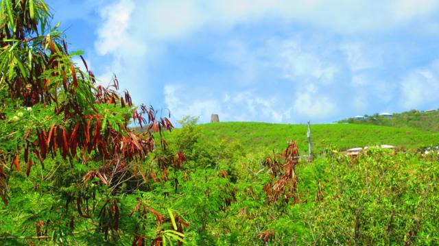 383 Cotton Valley Eb, St. Croix, VI 00820 (MLS #19-787) :: Hanley Team | Farchette & Hanley Real Estate