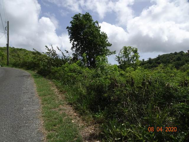 83 St. George Pr, St. Croix, VI 00840 (MLS #20-1346) :: Coldwell Banker Stout Realty