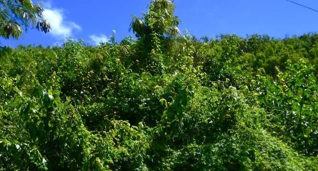35 Work & Rest Co, St. Croix, VI 00820 (MLS #20-1681) :: Hanley Team | Farchette & Hanley Real Estate