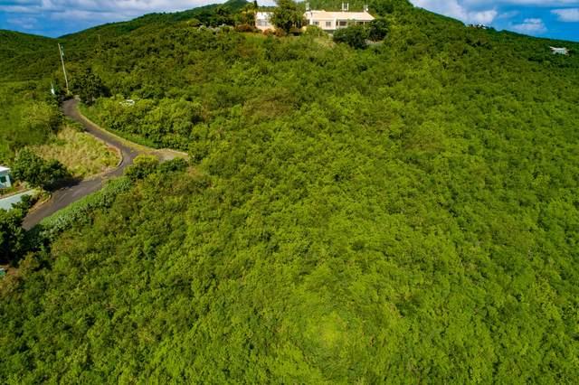 196 Union & Mt. Wash Ea, St. Croix, VI 00820 (MLS #21-1024) :: Hanley Team | Farchette & Hanley Real Estate