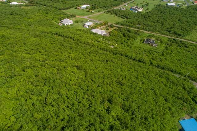 198 Union & Mt. Wash Ea, St. Croix, VI 00820 (MLS #21-1025) :: Hanley Team | Farchette & Hanley Real Estate
