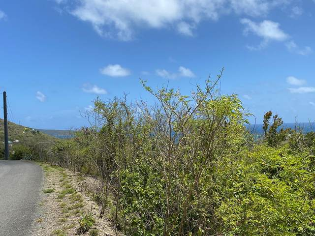 20 Catherine's Hope Eb, St. Croix, VI 00820 (MLS #21-1247) :: Coldwell Banker Stout Realty