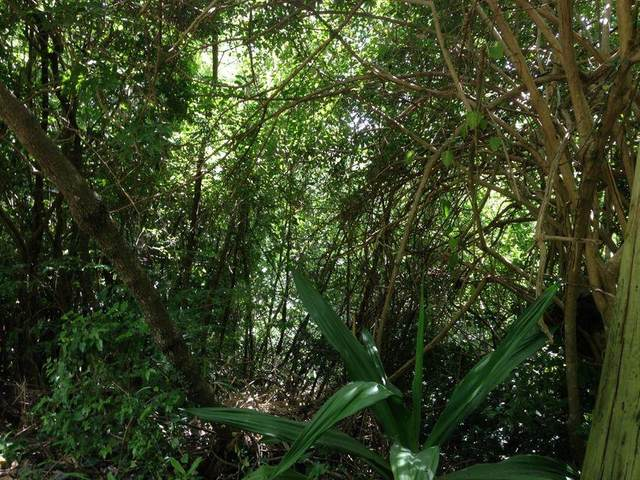 6A& Rem 6B Little Fountain Ki, St. Croix, VI 00850 (MLS #21-341) :: Hanley Team | Farchette & Hanley Real Estate
