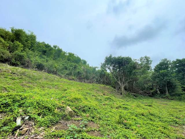 14A La Grange We, St. Croix, VI 00840 (MLS #21-900) :: The Boulger Team @ Calabash Real Estate