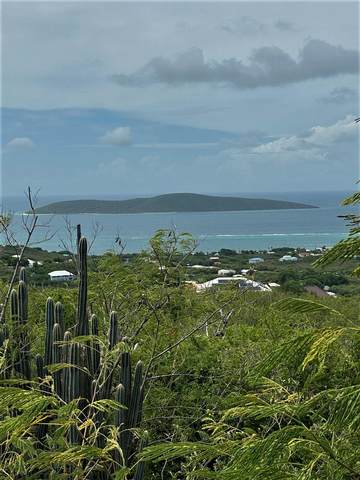 107 Hope & Carton H Eb, St. Croix, VI 00820 (MLS #21-902) :: Coldwell Banker Stout Realty