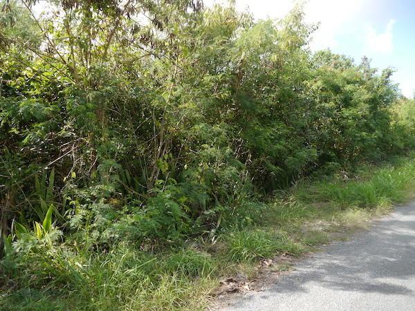 186 Mary's Fancy Qu, St. Croix, VI 00820 (MLS #19-204) :: Hanley Team | Farchette & Hanley Real Estate