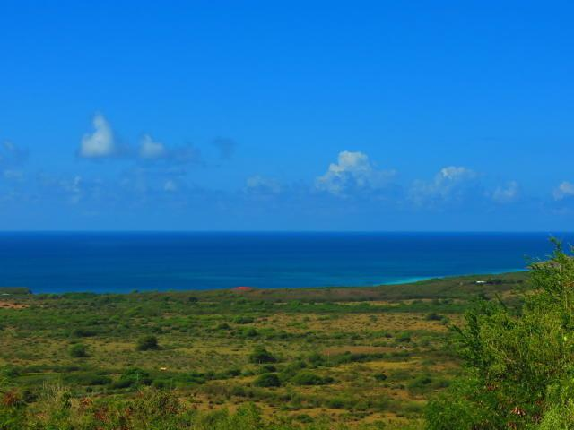 46 Grange Stock Estate Co, St. Croix, VI 00820 (MLS #19-266) :: Coldwell Banker Stout Realty