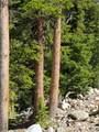 150 Porcupine Road - Photo 2