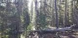 463 Gold Trail Circle - Photo 5