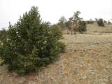 901 Elkhorn View Drive - Photo 3