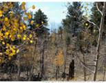 1100 Osprey Road - Photo 7