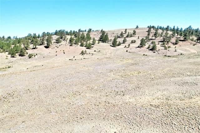 701 Eufaula Trail, Hartsel, CO 80449 (MLS #S1019302) :: Colorado Real Estate Summit County, LLC