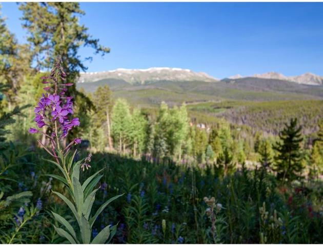 1072 American Way, Breckenridge, CO 80424 (MLS #S1010964) :: Resort Real Estate Experts