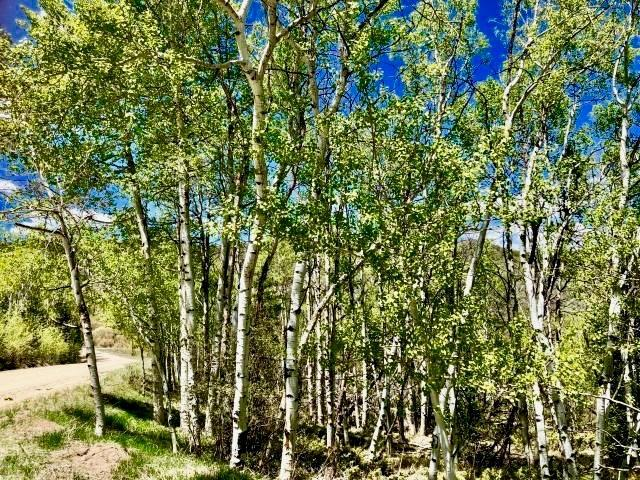 1743 Clairs Run, Parshall, CO 80468 (MLS #S1009070) :: Colorado Real Estate Summit County, LLC