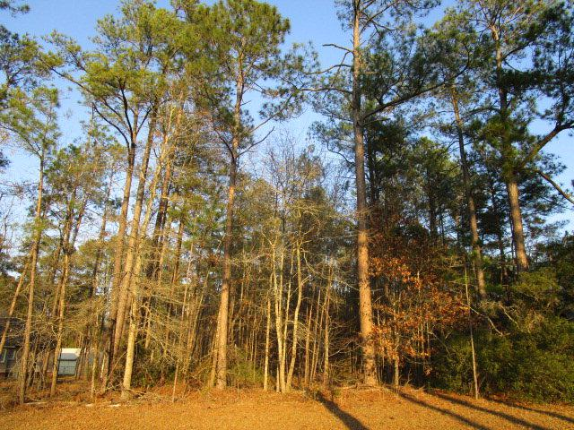 Lot 15 Pinewood Dr, Santee, SC 29142 (MLS #131624) :: Gaymon Realty Group