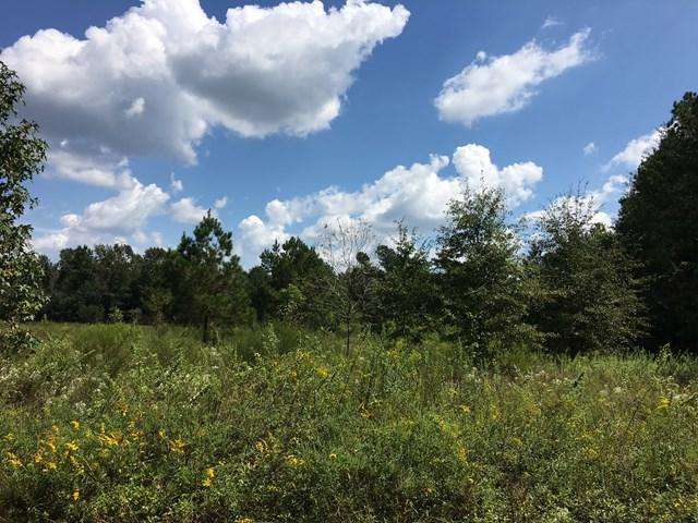 1523 Rev. Jw Carter Road, Manning, SC 29102 (MLS #134015) :: Gaymon Gibson Group