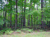 Lot 39 Nr Santee State Park, Santee, SC 29142 (MLS #142139) :: Realty One Group Crest