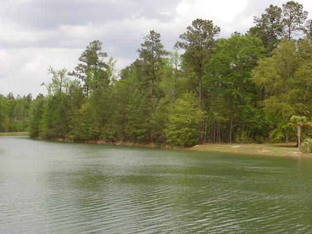 Lot # 29 Poplar Creek Dr, Elloree, SC 29047 (MLS #142506) :: The Litchfield Company
