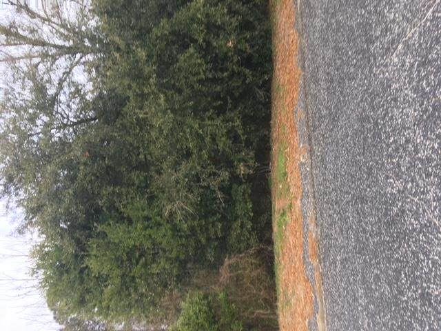 lot 21 Decatur Street - Photo 1