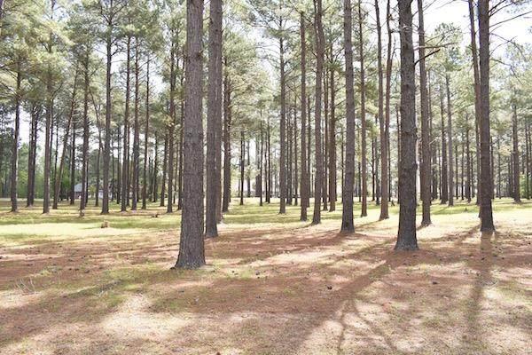 400 Pine Lake Ct. (L-2) - Photo 1