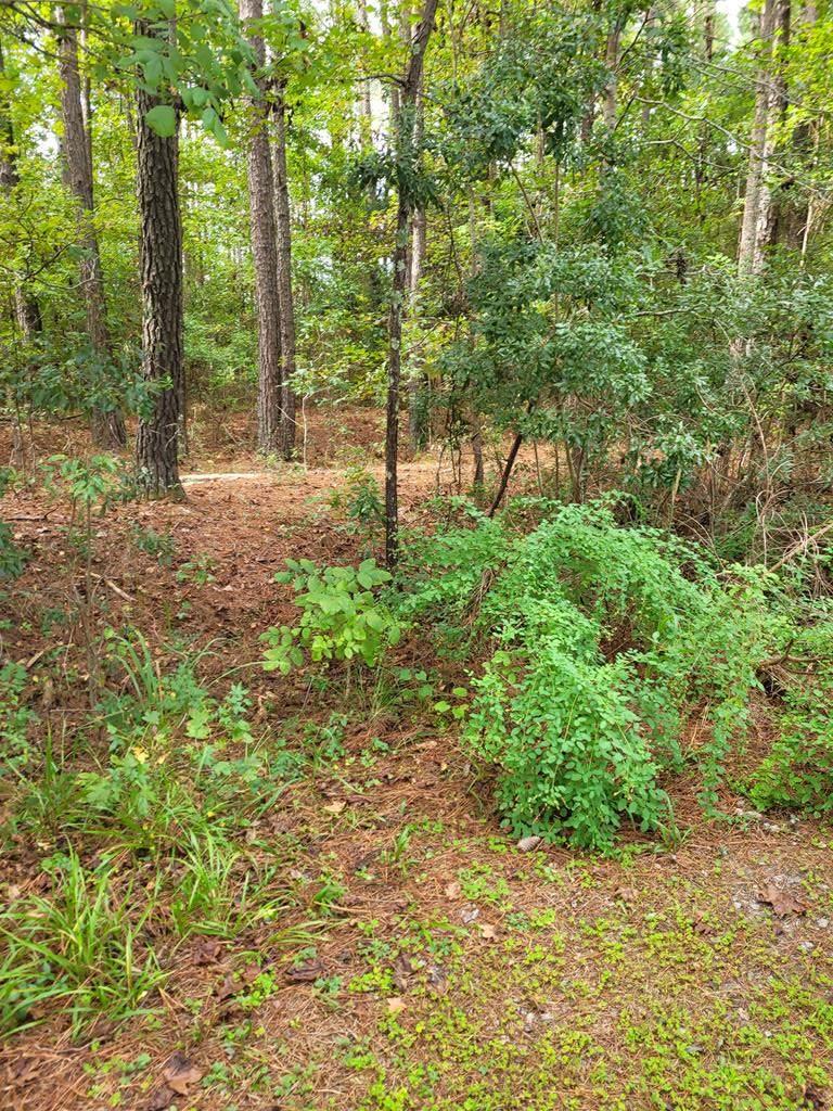 LOT 21 Wild Wood Lane - Photo 1
