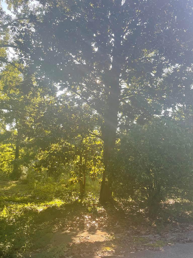 2350 Mount Vernon Dr - Photo 1