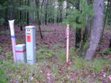 Meadow Wood - Photo 5